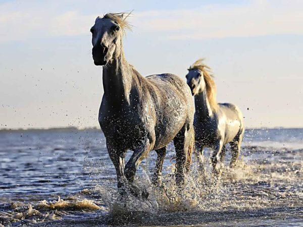 horse-1542480_1280 klein