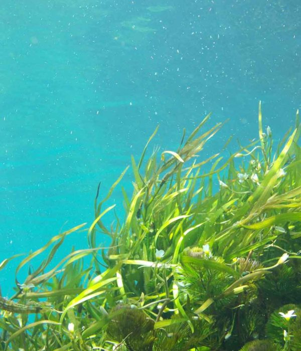 seaweed-1129226_1280 klein